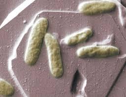 باکتری های فاضلاب