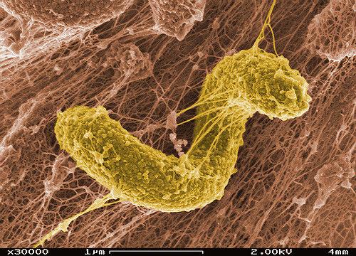 مکانیزم تصفیه بیولوژیکی فاضلاب چگونه است؟