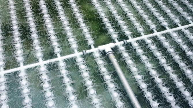 تصفیه بیولوژیکی فاضلاب با کمک باکتری های هوازی