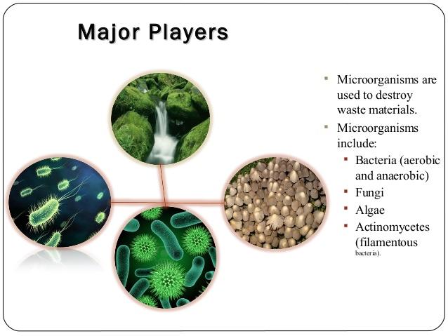 انواع میکروارگانیسم های تصفیه فاضلاب